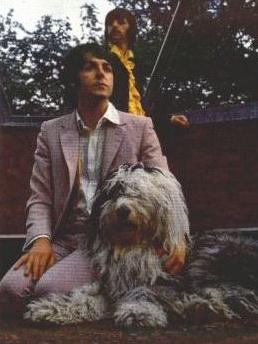 Fool on the hill, beatles, Paul McCartney, Martha, Old English Sheepdog, dog, purebred dog, music