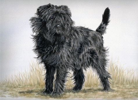 toy breeds, affenpinscher, chihuahua, sleeve dogs, purebred dogs, dogs