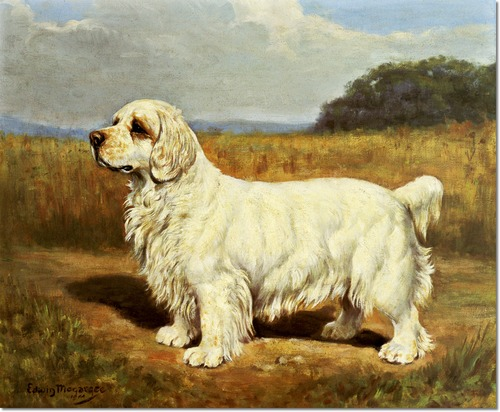 dogs, purebred dogs, Clumber Spaniel