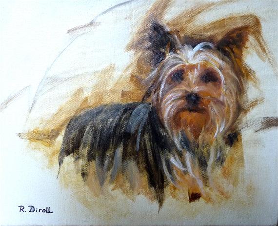 dog, purebred dog, Yorkshire Terrier