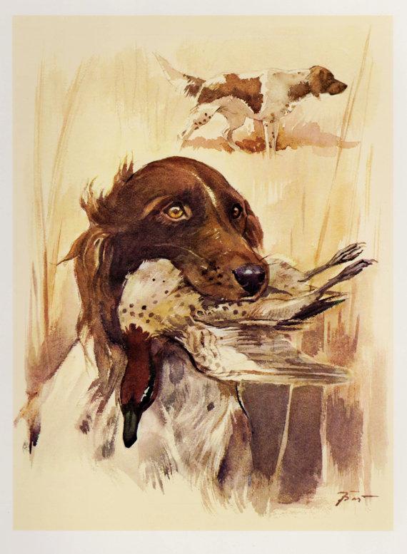 Small Munsterlander, Large Munsterlander, dogs, purebred dogs