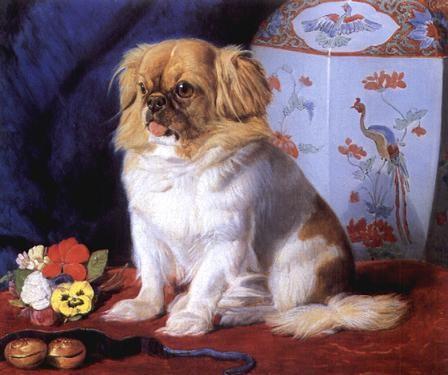 Looty, pekingese, queen victoria dogs purebred dog, peke
