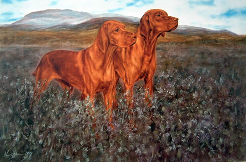 Derbies, field trial, dogs, purebred dogs, sporting breeds