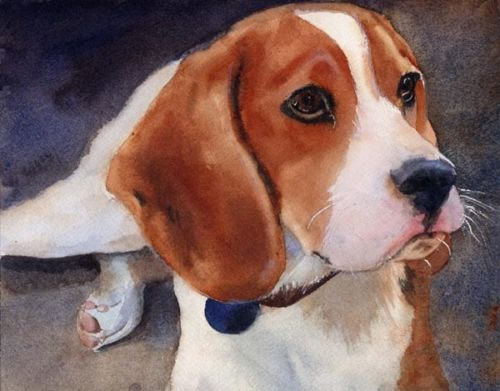 beagle, dogs, purebred dogs, rottweiler,
