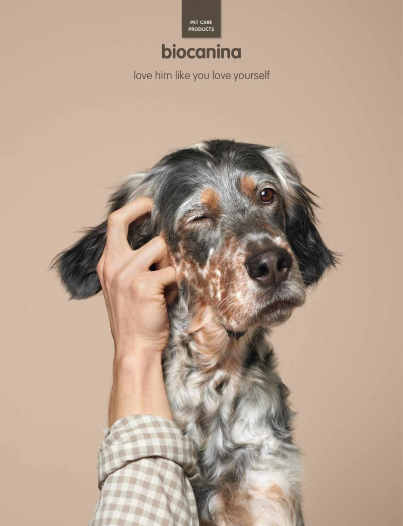 dogs, purebred dogs, advertising