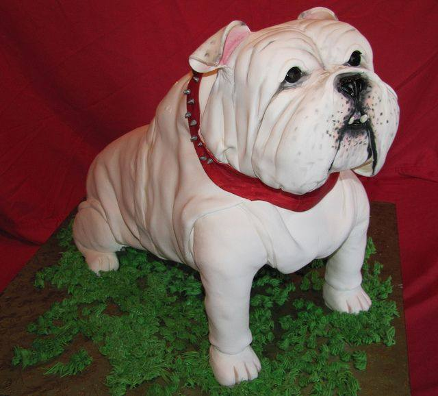 cake, bulldog, dogs, purebred dog