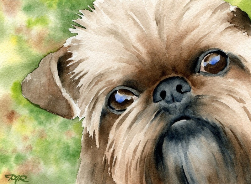 Brussels Griffon, Verdell, dogs, purebred dogs, As Good As It Gets, movies