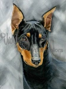 German Pinscher,Miniature Pinscher, dogs, purebred dogs, Werner Jung