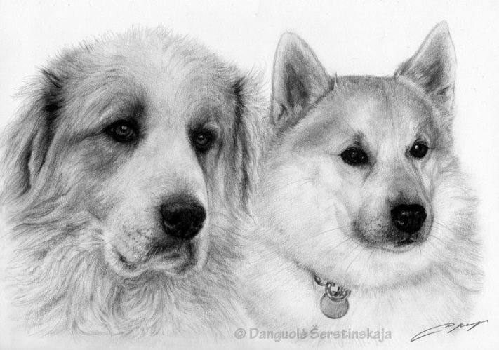 Dewlaps, nordic breeds, Alaskan Malamute, structure. dogs, purebred dogs