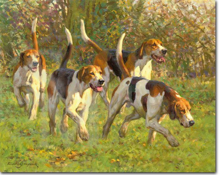 English Foxhound, hunts,Fox Hunt,dogs, purebred dogs