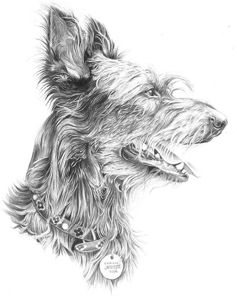 Berger Picard,Briard,Beauceron,dogs, purebred dogs, herding breed,purebred dogs