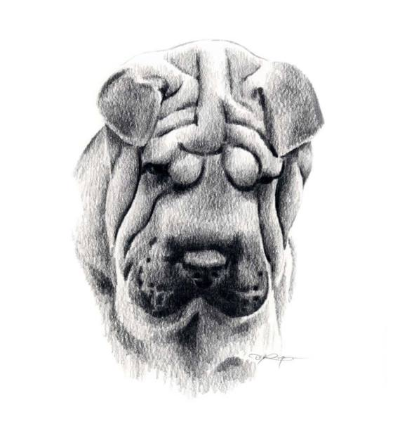 basal breed,chinese shar-pei,shar-pei,dogs, purebred dogs,