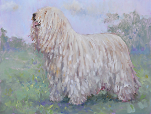 dogs, komondor, hungary, livestock guardian dog, purebred dog