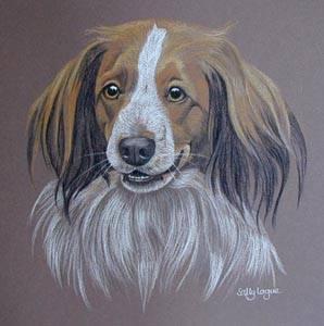 "earrings, ear bells, ears, structure,earrings"") are highly desirable in the Kooikerhondje,dogs, purebred dogs,"