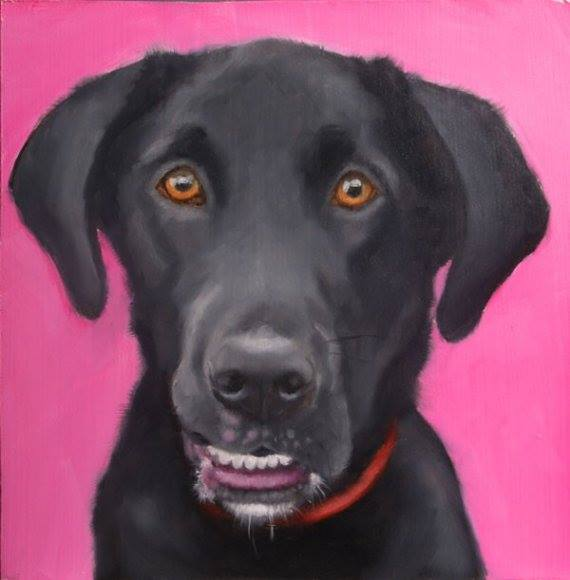 base narrow syndrome,Robert Cole, dention, bite, structure, dogs, purebred dogs