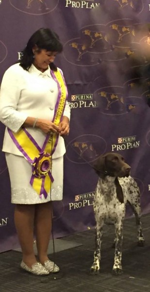 German Shorthaired Pointer,Westminster Kennel Club Dog Show,Westminster Kennel Club Dog Show Best in Show,Westminster,dogs, purebred dogs, CJ