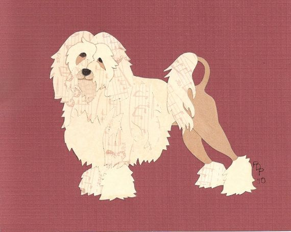 lowchen, little lion dog, dogs, purebred dogs