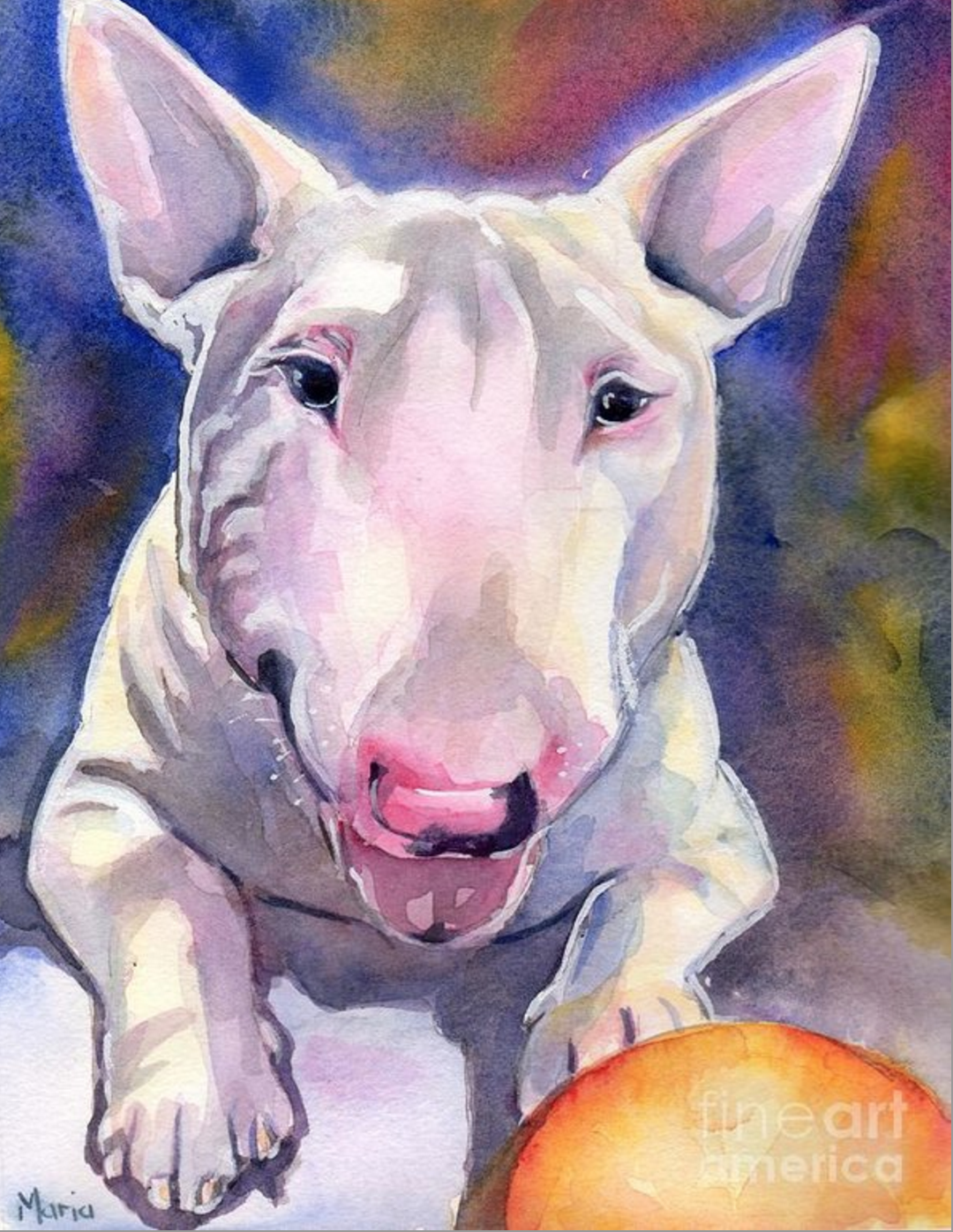 Miniature Bull Terrier, purebred dogs, Hildie, dogs
