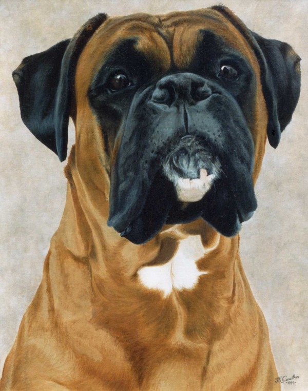 Head, structure, purebred dog, dogs, boxer,