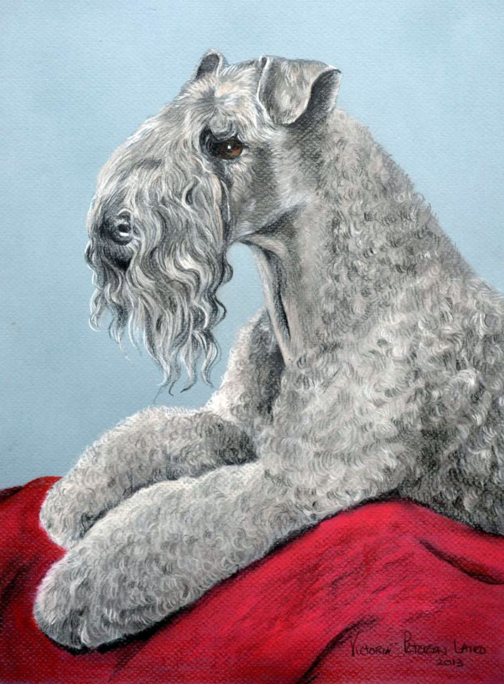 Kerry Blue Terrier, terrier, dogs, purebred dogs, coat color,