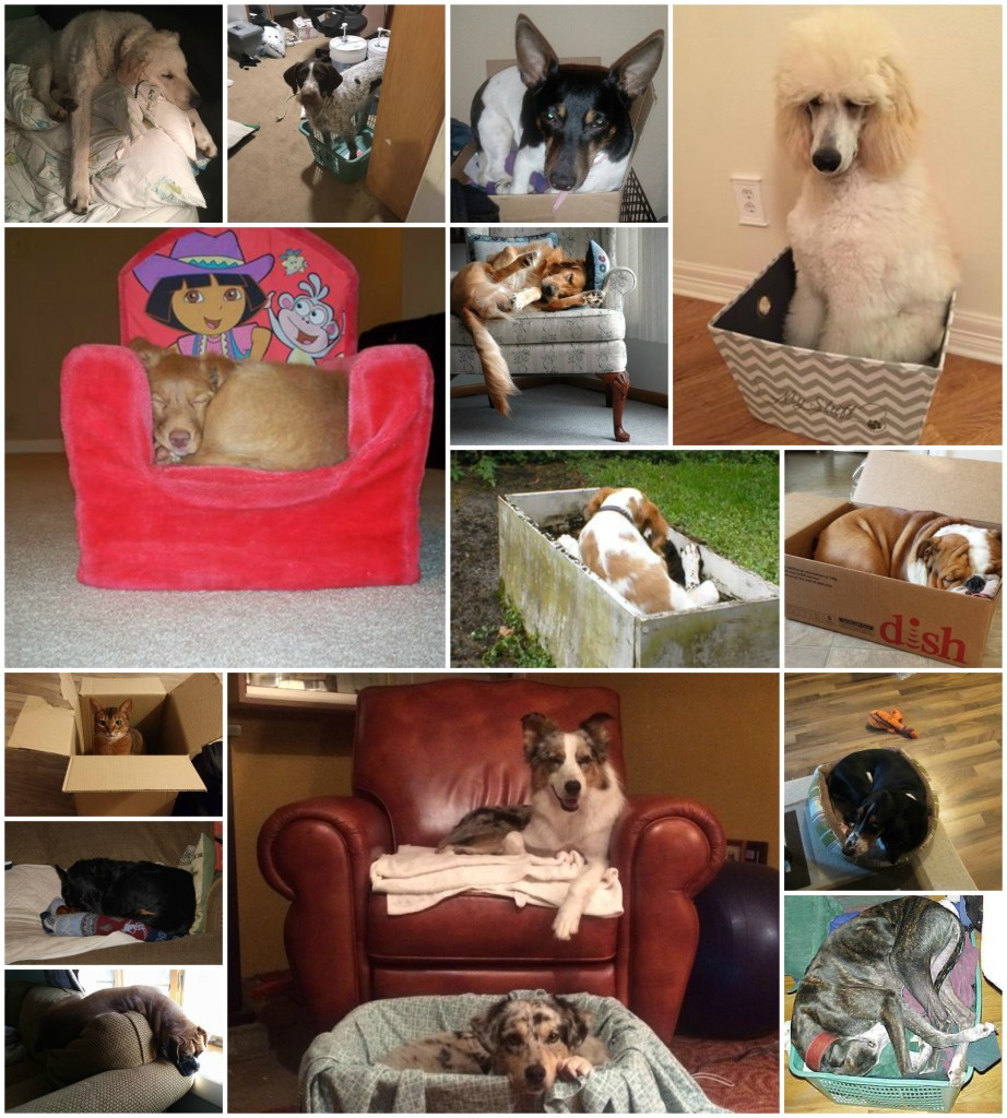 dogs in small spaces, dogs, purebred dogs