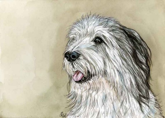 dominant fading factor,PONS,Polish Lowland Sheepdog, dogs, purebred dogs, color, coat, Bearded Collie