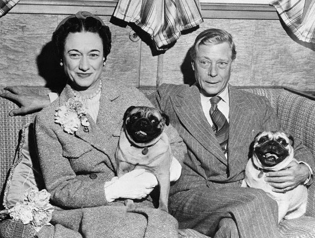 Pugs, Duke of Windsor, purebred dogs, dogs, Cairn Terrier