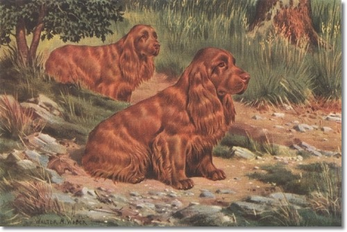 dogs, purebred dogs, history, sussex spaniel, spaniel,Augustus Elliott Fuller