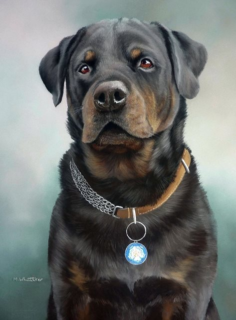 Dogs,history,Purebred Dog,red tile,Rottweiler