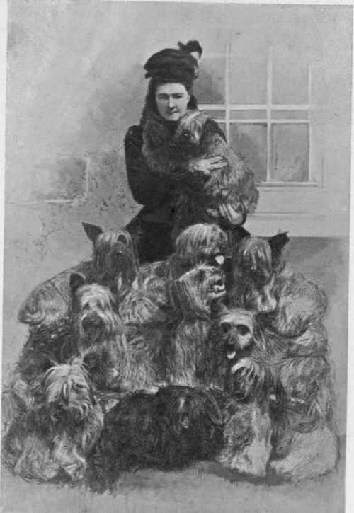 Skye Terrier,dog,history,purebred