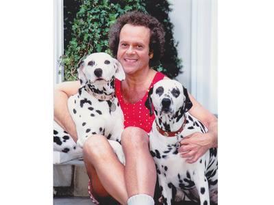 Richard Simmons,dalmatian,dog,purebred dog