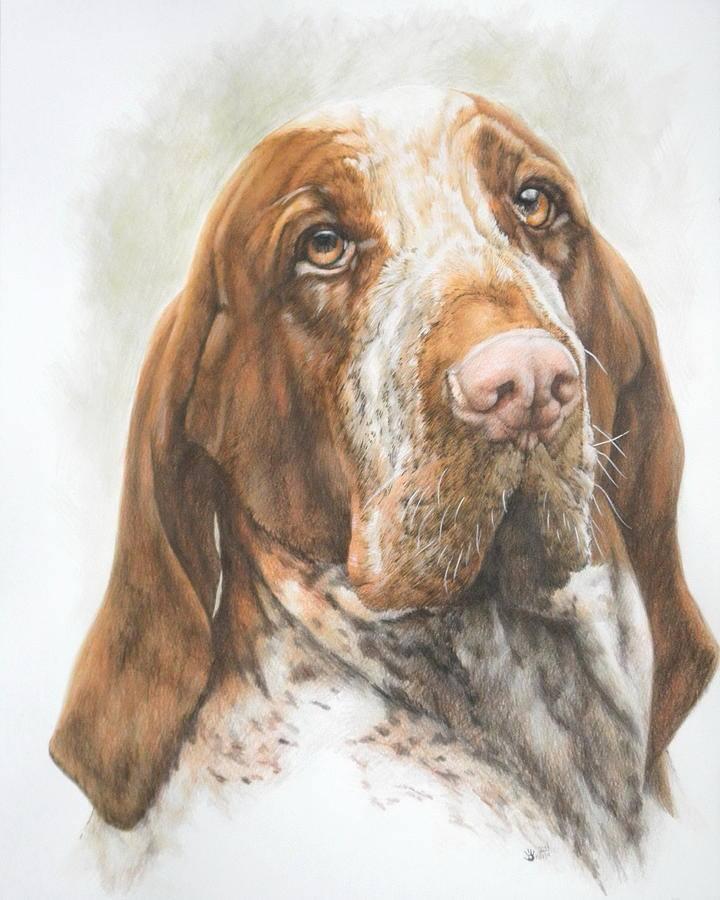 Bracco Italiano,Dogs,Gonzaga,Medici,Purebred Dogs
