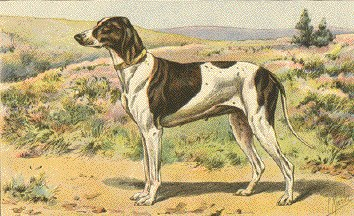 Braque du Puy,extinct,dog,Extinct Dog Breeds