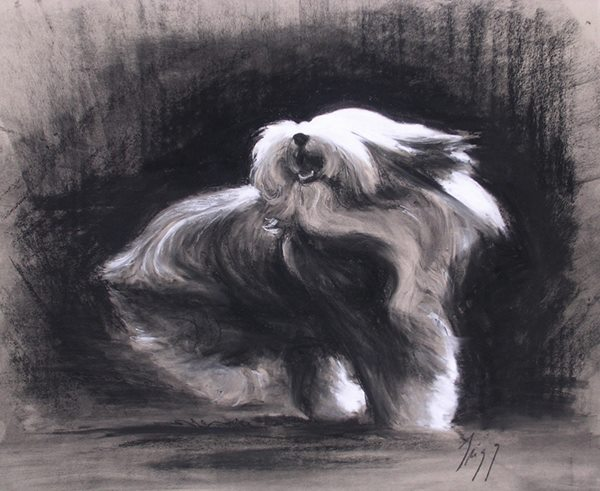 Polski Owczarek Nizinny,Scotch Sheepdog,Highland Collies,beardies,Hairy Mou'ed Collies,Shetland Sheepdog,bearded collie,dog,purebred dog,breed history,history,Polish Lowland Sheepdog