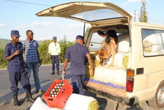 German Shepherd Dog,English Springer Spaniel,Labrador Retriever, Rwanda National Police,drug detection,explosive detection