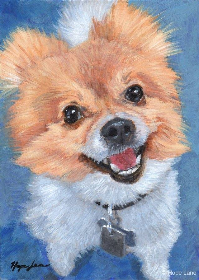 Pomeranians,King George III,dogs,purebred,Charlotte