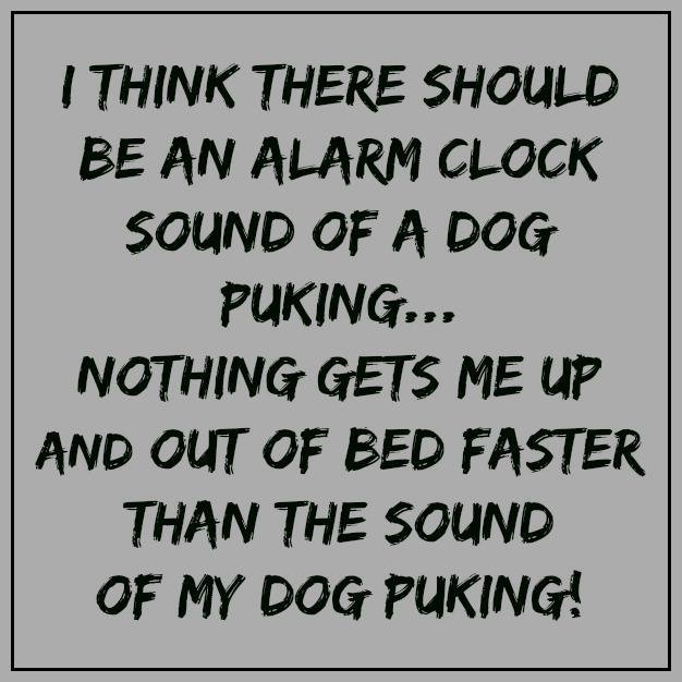 puking,dogs,purebred,alarm clock