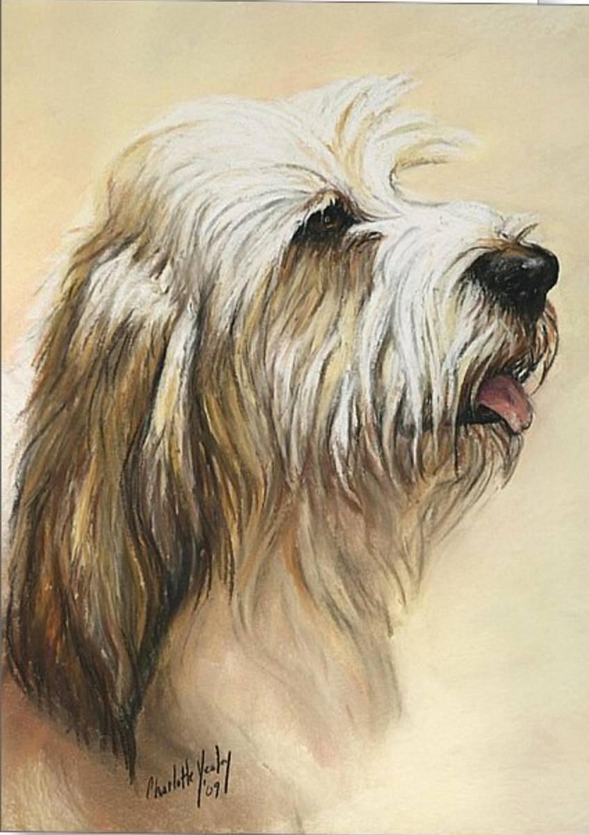 Dogs,hound,PBGV,Petit Basset Griffon Vendéen,Purebred Dog