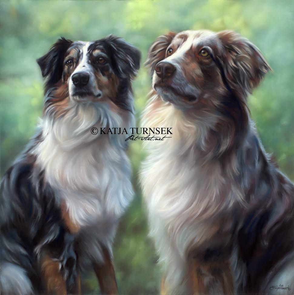 Australian Shepherd,eyes,color,purebred,dogs