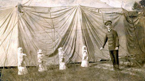 tightrope,dog,purebred Dog, American Eskimo Dog,Stout's Pal Pierre
