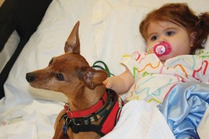 Min Pin, therapy dog,Miniature Pinscher, Beanie Baby,dog,purebred dog, mayo clinic,Dr. Jack