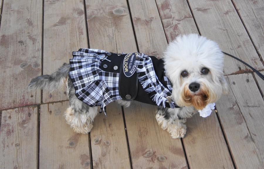 tartan,Sir Walter Scott,Guy Mannering, Dandie Dinmont, terrier, dogs, purebred dogs,Vulnerable Breeds,