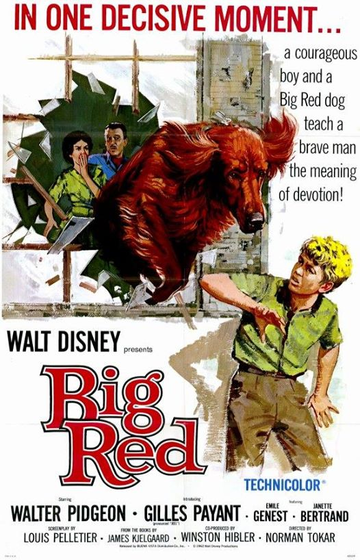 Jim Kjelgaard,Big Red,Irish Setter,movies,dogs,purebred