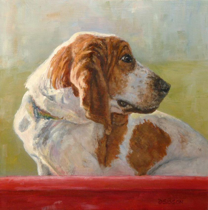 Dry Skin,coat,structure,dogs,purebred dog,Scent hound,Basset Hound