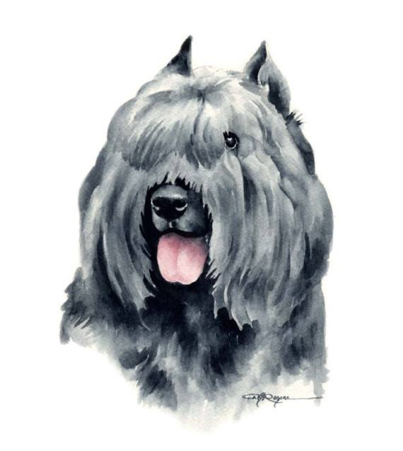 Bouvier,Bouvier des Flandres, cropping,docking,ears,tail,dogs,purebred dog