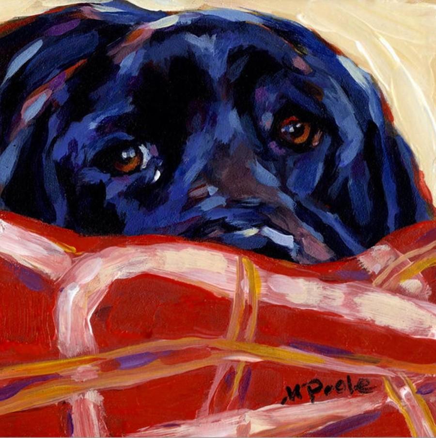 Labrador Retriever,hitler,dog,purebred dog,