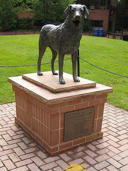 Chesapeake Bay Retriever, mascot, dogs, purebred dogs, True Grit,