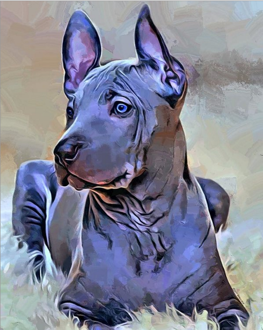 Thai Ridgeback, national dog of Thailand, dogs, purebred dogs,