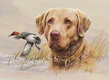 Chesapeake Bay Retriever,James Michener,dogs, purebred dogs,