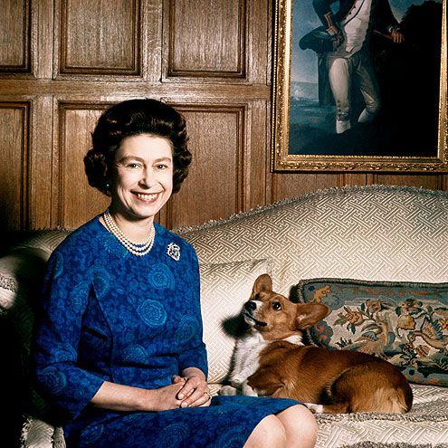 queen elizabeth, Corgis, dogs, purebred dogs,